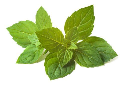 Heilfasten Buchinger - Grüne Minzblätter symbolisieren die schonende und kalorienarme Fastenverpflegung.